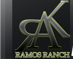 Friesian Colt, Ramos Ranch, Friesian Colts, Friesians horses for